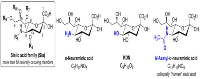 صطلاح اسیدهای سیالیک به خانواده ای از مونوساکاریدها اطلاق می شود که بیش از 60 عضو دارد و همگی مشتق د-نورامینیک اسید (قند 9 کربنه) هستند